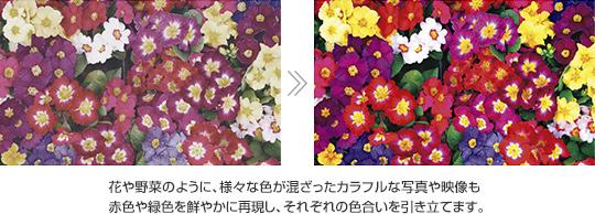 色彩際立つ描写力 トリルミナス® ディスプレイ for mobile / X-Reality® for mobile / ダイナミックコントラストエンハンサー
